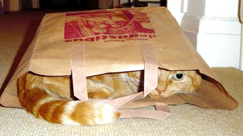 cat-in-bag-Nov-03